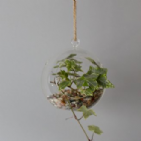 Hanging Terrarium Glass Plant Candle Crystal Hanging Decoration